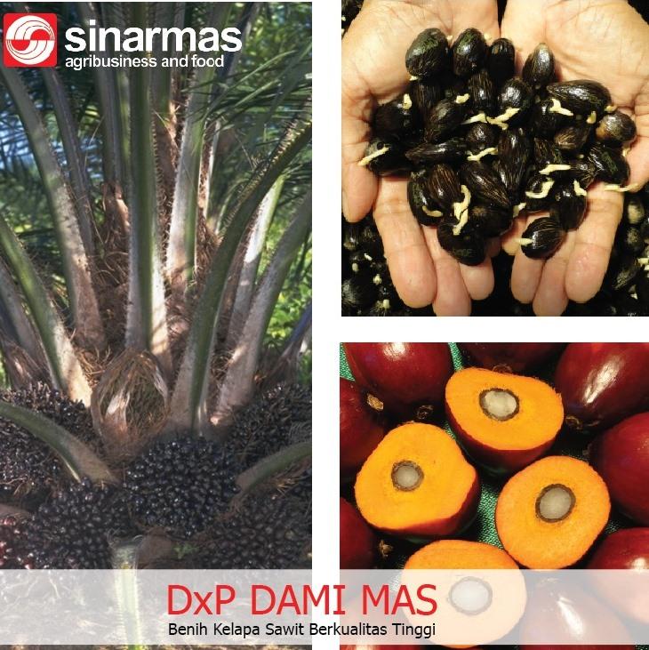 http://www.benihperkebunan.com/images/DAMI-MAS.jpeg